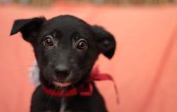 Piccoli cuccioli svegli Fotografie Stock Libere da Diritti