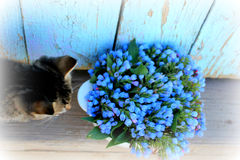 Piccoli e fiori blu del gatto nella ciotola Immagine Stock Libera da Diritti