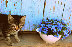 Piccoli e fiori blu del gatto nella ciotola Immagine Stock