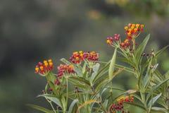 Piccoli fiori fotografie stock