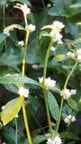 Piccoli fiori Fotografia Stock