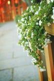 Piccoli fiori bianchi fotografia stock libera da diritti