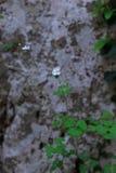 Piccoli fiori bianchi immagini stock