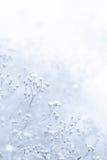 Piccoli fiori bianchi De-messi a fuoco con effetto d'annata Fotografia Stock