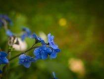 Piccoli fiori blu Fotografie Stock Libere da Diritti