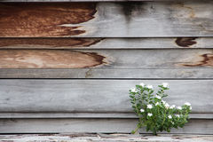 Piccoli fiori con una parete di legni Fotografie Stock Libere da Diritti