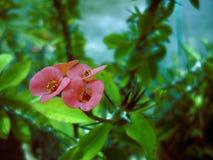 Piccoli fiori del campo Immagini Stock Libere da Diritti