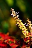 Piccoli fiori e foglie verdi porpora Fotografia Stock Libera da Diritti