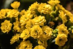 Piccoli piccoli fiori gialli immagine stock