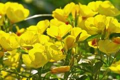 Piccoli fiori gialli Immagine Stock Libera da Diritti