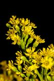 Piccoli fiori gialli da un mazzo immagini stock