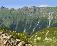 Piccoli fiori gialli della molla in montagne Immagine Stock Libera da Diritti