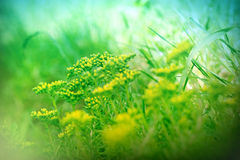 Piccoli fiori gialli insoliti Fotografia Stock Libera da Diritti