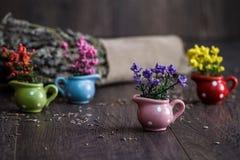 Piccoli fiori gialli, porpora e rossi artificiali in poco Flowe Immagini Stock