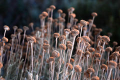 Piccoli fiori graziosi Fotografia Stock