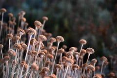 Piccoli fiori graziosi Immagini Stock Libere da Diritti