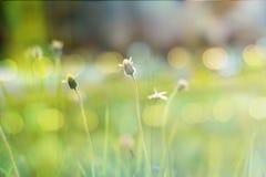 Piccoli fiori nello stile d'annata Fotografie Stock