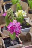 Piccoli fiori per la piantatura in un giardino fotografia stock