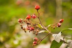 Piccoli fiori selvaggi fotografia stock libera da diritti