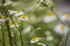 Piccoli fiori, un Peng di un anno immagini stock libere da diritti
