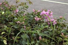 Piccoli fiori viola Immagine Stock