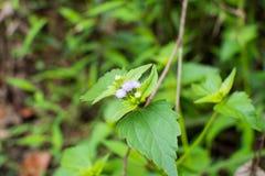 Piccoli fiori viola Immagine Stock Libera da Diritti