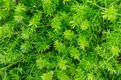 Piccoli fogli di verde Fotografia Stock Libera da Diritti