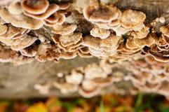 Piccoli funghi Fotografie Stock Libere da Diritti