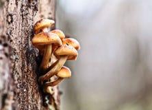 Piccoli funghi Immagine Stock
