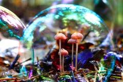 Piccoli funghi Fotografia Stock Libera da Diritti