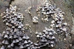 Piccoli funghi bianchi sulla corteccia di albero Fotografia Stock Libera da Diritti