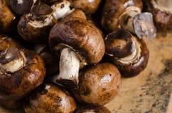 Piccoli funghi marroni, su un bordo di legno con le ustioni ed i tagli immagini stock libere da diritti