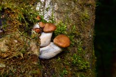 Piccoli funghi su un albero Fotografie Stock