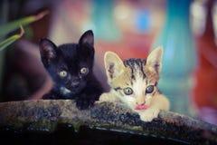 Piccoli gatti Fotografie Stock Libere da Diritti