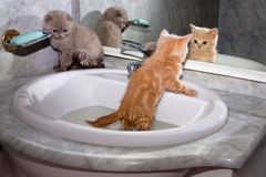 Piccoli gattini che bagnano nel lavandino fotografia stock libera da diritti