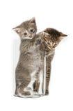 Piccoli gattini divertenti Fotografia Stock Libera da Diritti