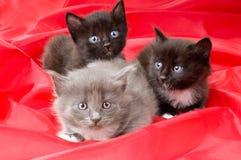 Piccoli gattini lanuginosi Immagine Stock Libera da Diritti