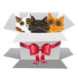 Piccoli gattini in un contenitore di regalo bianco con l'arco rosso Tre gatti Immagine Stock Libera da Diritti