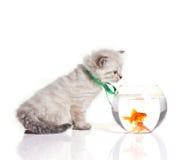 Gatto e pesci rossi foto stock iscriviti gratis for Pesci rossi piccoli
