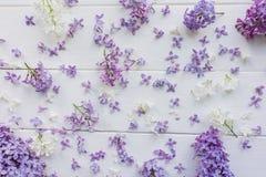 Piccoli germogli del lillà sui bordi di legno bianco-dipinti Immagini Stock