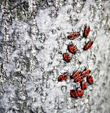 13 piccoli insetti Fotografia Stock