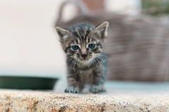Piccoli occhi di gatto Immagini Stock