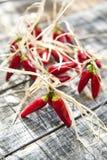Piccoli peperoncini rossi rossi piccanti Fotografia Stock
