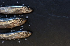 Piccoli pesci con sale sulla tavola Fotografie Stock