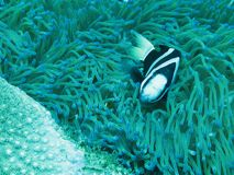 Grande pesce poco pesce fotografie stock libere da diritti