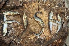 Piccoli pesci essiccati che formano il pesce di parola fotografie stock libere da diritti