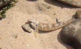 Pesci piccoli d alimentazione foto stock 87 pesci for Piccoli piani cottage sulla spiaggia