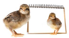 Piccoli polli Fotografia Stock