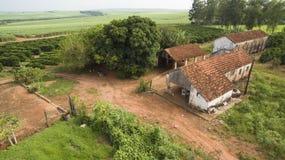 Piccoli polli dell'azienda agricola e caffè all'interno del Brasile Immagini Stock Libere da Diritti