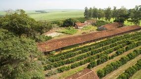 Piccoli polli dell'azienda agricola e caffè all'interno del Brasile Immagine Stock Libera da Diritti